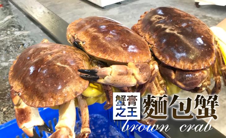 【台北濱江】愛爾蘭鮮活麵包蟹700~800g/隻~膏黃相當飽滿,風味濃郁鮮甜